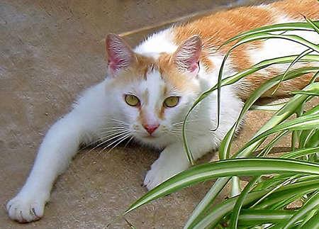 Fleck a feral cat adopts my yard