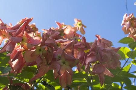musa: Musa Flower., flower, plant, ometepe island