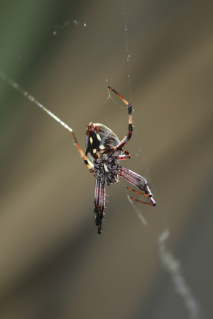arachnids: red spider, spider webs, animals, insects. Stock Photo