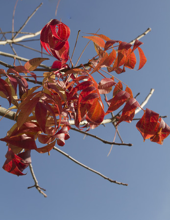 Fall Color,red leaves, nature plants, Autumn leaf