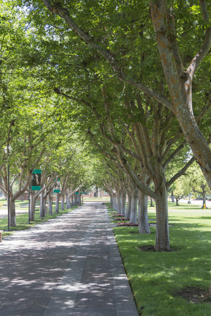 Alameda tree, Homestead Museum  ,California Landmark,City of Industry, CA. USA. Editorial