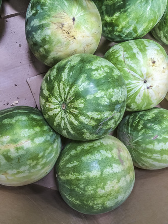 ca: Small watermelons, one of the summertime favorite fruits,Los Angeles CA. USA.