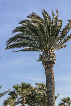 ca: Palms tree at White Point Beach, San Pedro CA. USA. Stock Photo