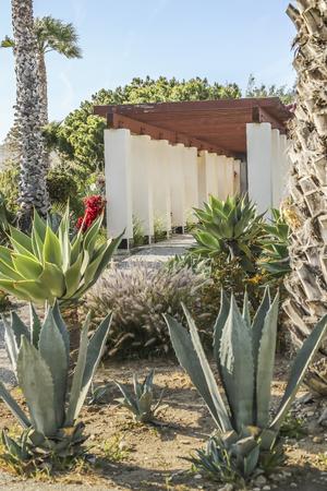 san pedro: Cactus garden at White Point beach, San Pedro, CA. USA.