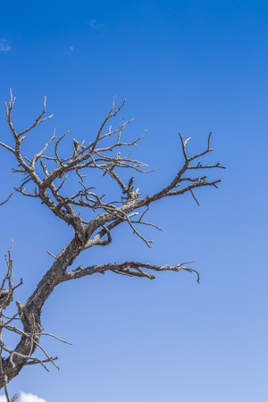 Isolated tree at the Eagle Canyon, Utah, United States of America Imagens