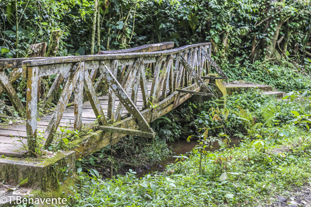 Old Bridge at the Peñas Blancas Massif natural reserve,  Jinotega, Matagalpa, Nicaragua Imagens