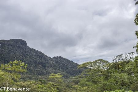 Panoramic view of the  Peñas Blancas Massif natural reserve, Jinotega, Matagalpa,Nicaragua