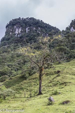 The Peñas Blancas Massif natural reserve,  Jinotega, Matagalpa, Nicaragua