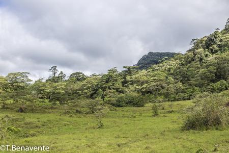 Green praire at  the Peñas Blancas Massif natural reserve,  Jinotega, Matagalpa, Nicaragua