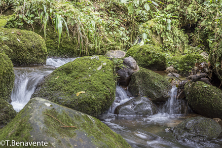 River cascade at Peñas Blancas Massif natural reserve, Jinotega, Matagalpa, Nicaragua Imagens