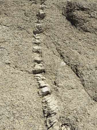 Rock columns like vertebrae anatomy at the Isabella lake, Kern County, California, United States. Imagens