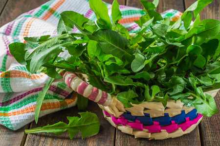 edible plant: Useful plants in nature: fresh dandelion leaves for a salad in a basket, cloth on a wooden table