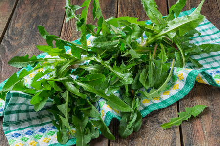 Fresh washed dandelion leaves on a napkin and a wooden table prepared for the spring vitamin salad
