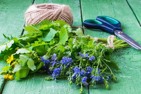 phytotherapy: Phytotherapy: bunches of herbs (Veronica Chamaedrys, celandine, nettle, plantain) prepared for drying, twine and scissors on green wooden table. Selective focus