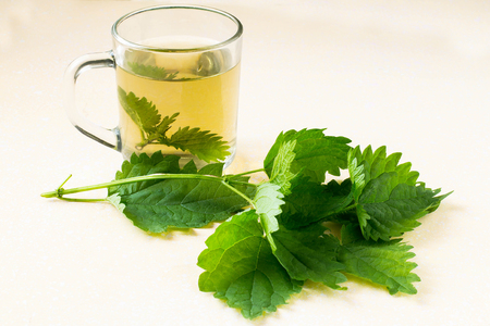 bactericidal: Herbal medicine: fresh nettles and broth in a glass mug on a light yellow background