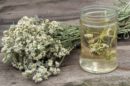 antispasmodic: A bunch of dried yarrow and decoction in the glass jar for herbal medicine on an old wooden table