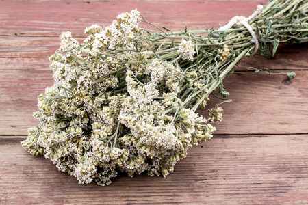 antispasmodic: Herbs for herbal medicine: a bundle of dried flowers medicinal yarrow on an old wooden table