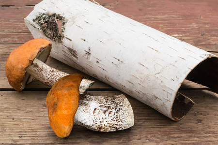 birch bark: Two mushroom with orange caps (Leccinum Aurantiacum) and birch bark on a roll on the old wooden table. Selective focus