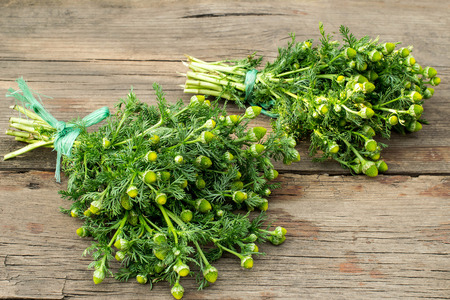 matricaria: Flowers of wild chamomile without petals (Matricaria discoidea)  in bunches on a wooden table Stock Photo