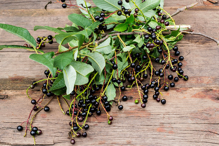 Ripe berries bird cherry (Prunus Padus) on the branches with leaves on the old wooden table Stock Photo