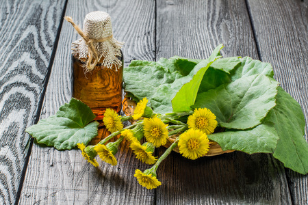 Medicinal plant – coltsfoot (Tussilago farfara). The infusion, leaves and flowers in a basket Stock Photo