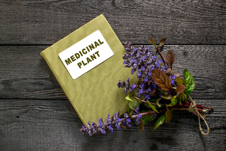 edible plant: Medicinal plant Ajuga reptans and herbalist handbook. Ajuga reptans - edible plant, nectariferous and is used in horticulture