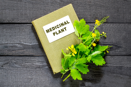 herbolaria: Medicinal plant celandine and herbalist handbook on the old wooden table. Widely used in the treatment of skin diseases