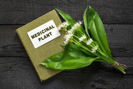 handbook: Medicinal plant ramson (allium ursinum) and herbalist handbook. Ramson - edible plant, nectariferous and is used in horticulture