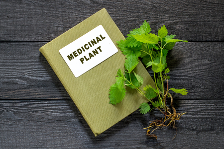 handbook: Medicinal plant nettle (Urtica dioica) and herbalist handbook on the old wooden table. It is used in food preparation and production of fabrics