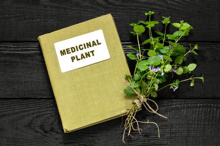 herbolaria: planta medicinal Glechoma hederacea y el manual de herbolario. Se utiliza en la medicina natural, la nutrición, la horticultura