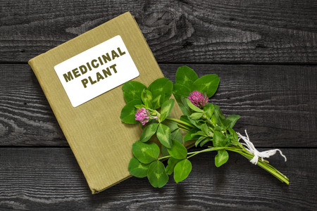 expectorant: Medicinal plant Red clover (Trifolium pratense) and herbalist handbook. Used in herbal medicine, cooking, to animal feed, honey plant