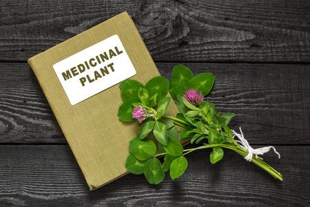 herbolaria: planta medicinal El tr�bol rojo (Trifolium pratense) y el manual de herbolario. Se utiliza en la medicina natural, la cocina, a la alimentaci�n animal, planta de miel Foto de archivo