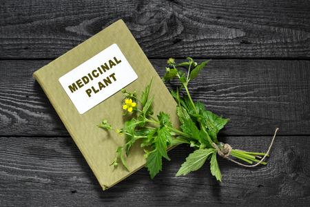 herbolaria: planta medicinal Geum urbanum (conocida también como la madera avens, hierba Bennet, colewort y la hierba de San Benito) y el manual de herbolario. Se utiliza en la medicina natural, la cocina, los alimentos para los animales, las plantas de abeja y el insecticida