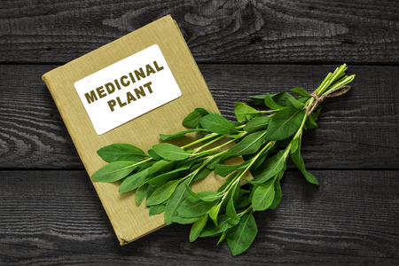 tannins: Medicinal plant Polygonum aviculare or common knotgrass (prostrate knotweed, birdweed, pigweed and lowgrass) and herbalist handbook. Used in herbal medicine, cooking, food for animals