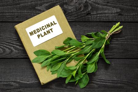 herbolaria: Medicinal planta Polygonum aviculare o knotgrass común (Centidonia postrado, birdweed, bledo y lowgrass) y el manual de herbolario. Se utiliza en la medicina natural, la cocina, los alimentos para animales Foto de archivo