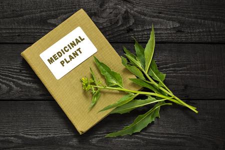 herbalist: Medicinal orientalis planta Bunias (cohetes de Turqu�a, mostaza colina, col verrugosa turco, verrugosa col) y el manual de herbolario. Se utiliza en la medicina natural, la cocina, los alimentos para animales Foto de archivo