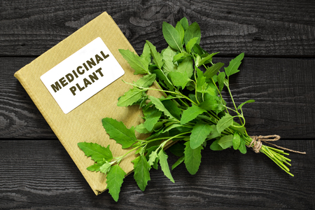 herbolaria: Medicinal plant Atriplex (saltbush, orache) and herbalist handbook. Used in herbal medicine, cooking, food for animals, to prevent soil erosion