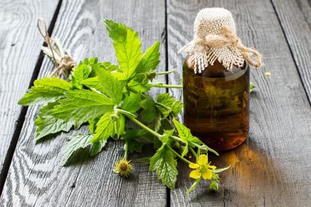 Medicinale plant Geum urbanum en farmaceutische fles. Gebruikt in de kruidengeneeskunde, het koken, voedsel voor dieren, bijenplant en insecticide. selectieve aandacht