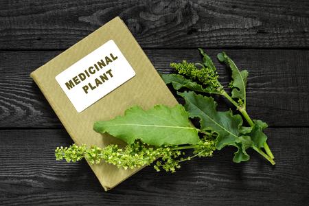 herbolaria: planta medicinal caballo alazán (confertus Rumex, asiática Dock) y el manual de herbolario. Se utiliza en la medicina natural, la cocina (limitado), alimentos para animales, para la producción de colorantes, curtido de pieles Foto de archivo