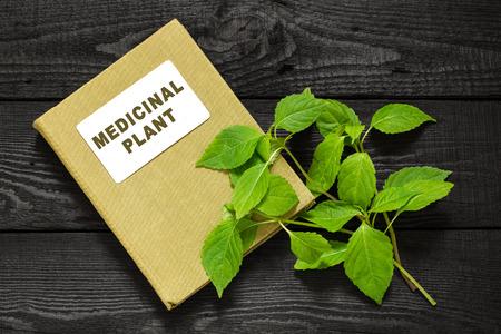 herbalist: planta medicinal goutweed (Aegopodium) y el manual de herbolario. Se utiliza en la medicina natural, la cocina, la planta de abeja