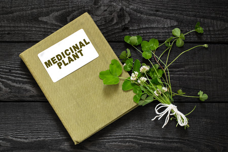herbolaria: Medicinal plant Trifolium repens or the white clover (also known as Dutch clover and Ladino clover) and herbalist handbook. Used in herbal medicine, to animal feed, lawn decoration, honey plant