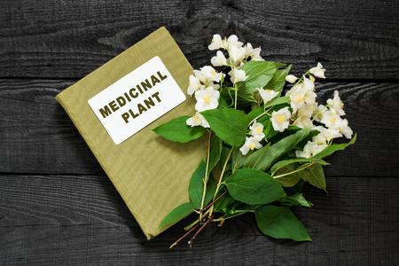 herbolaria: planta medicinal Filadelfo (jazmín, naranja Mock) y el manual de herbolario. Se utiliza en la medicina natural, la cocina, la cosmética y perfumería, jardinería