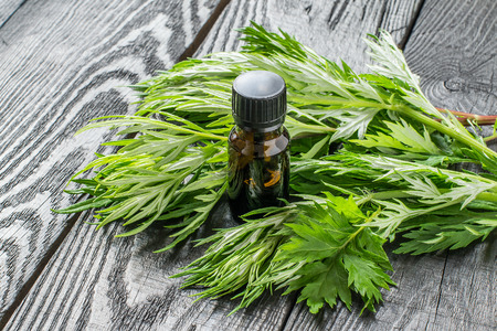 Essential oil of wormwood (Artemisia absinthium) in a small brown bottle, fresh sagebrush branches on a dark wooden table
