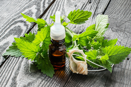 melissa: Essential oil melissa officinalis in a small brown bottle and pendant aromatic, fresh melissa on a dark wooden table