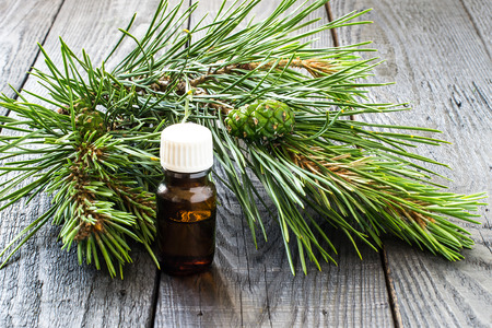 Pine essential oil in the small brown pharmaceutical vial and pine branches (Pinus silvestris) with green cones on dark wooden table Stock Photo