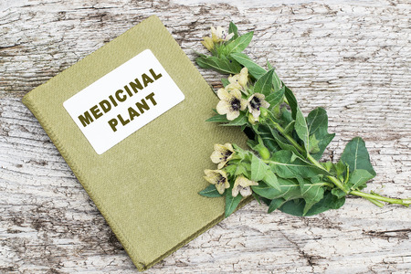 herbolaria: Black henbane (Hyoscyamus niger) and herbalist handbook. Henbane poisonous plant. In herbal medicine is used as a medicinal plant