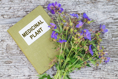astringent: Medicinal plant Meadow geranium (Geranium pratense) and herbalist handbook. Used in herbal medicine, is a good honey plant Stock Photo
