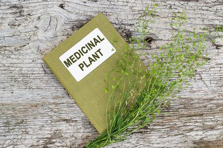 herbolaria: bolso medicinal planta de pastor (Capsella bursa-pastoris) y el manual de herbolario en la vieja mesa de madera. Se utiliza en la medicina natural, la alimentaci�n saludable, as� como para fines cosm�ticos