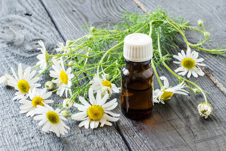 matricaria: Chamomile essential oil in a brown pharmaceutical bottle and chamomile flowers (Matricaria hamomilla) on a dark wooden table. Selective focus Stock Photo