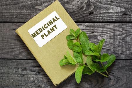 herbolaria: medicinal menta planta (Mentha spicata) y el manual de herbolario en una mesa de madera oscura. Utilizado en la aromaterapia, fitoterapia, SPA, comida sana y vegetariana